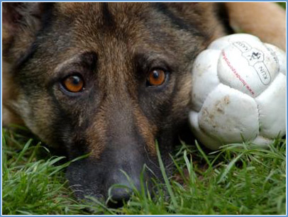 hund-mit-ball rand futterparadies-anranter